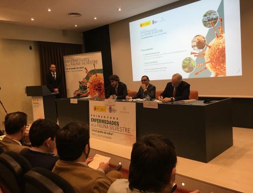 El Ministerio de Agricultura y el sector cinegético abordan los principales retos ante las enfermedades que afectan a la fauna silvestre